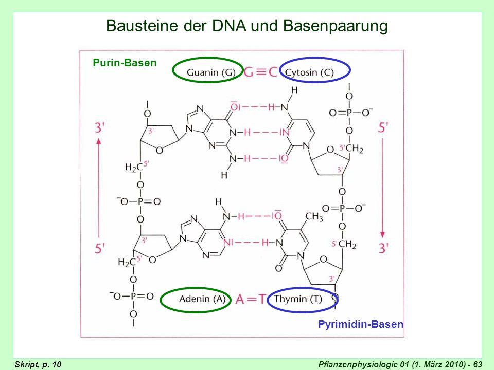 Pflanzenphysiologie 01 (1. März 2010) - 63 Basenpaarung Bausteine der DNA und Basenpaarung Purin-Basen Pyrimidin-Basen Skript, p. 10