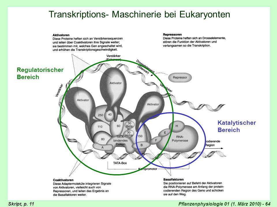 Pflanzenphysiologie 01 (1. März 2010) - 64 Transkription Transkriptions- Maschinerie bei Eukaryonten Regulatorischer Bereich Katalytischer Bereich Skr