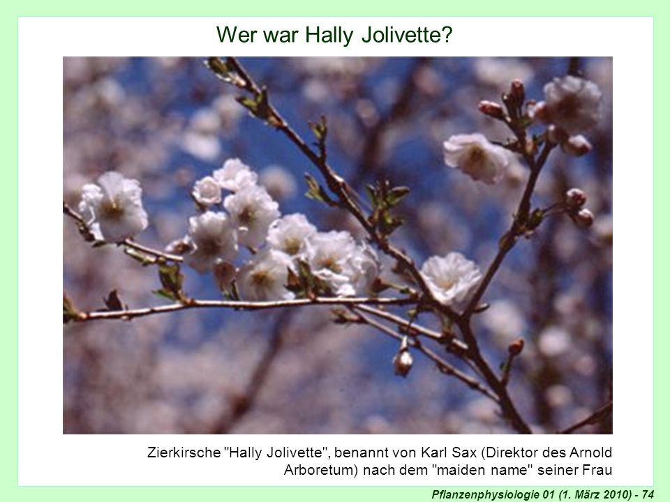 Pflanzenphysiologie 01 (1. März 2010) - 74 Zierkirsche
