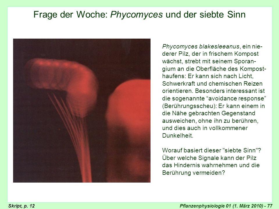 Pflanzenphysiologie 01 (1. März 2010) - 77 Frage der Woche: Phycomyces und der siebte Sinn Phycomyces blakesleeanus, ein nie- derer Pilz, der in frisc