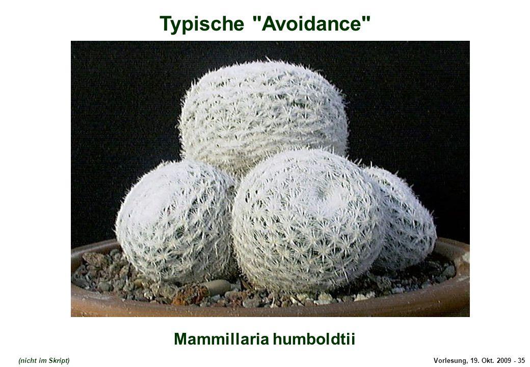 Vorlesung, 19. Okt. 2009 - 35 Typische Avoidance Mammillaria humboldtii (nicht im Skript)