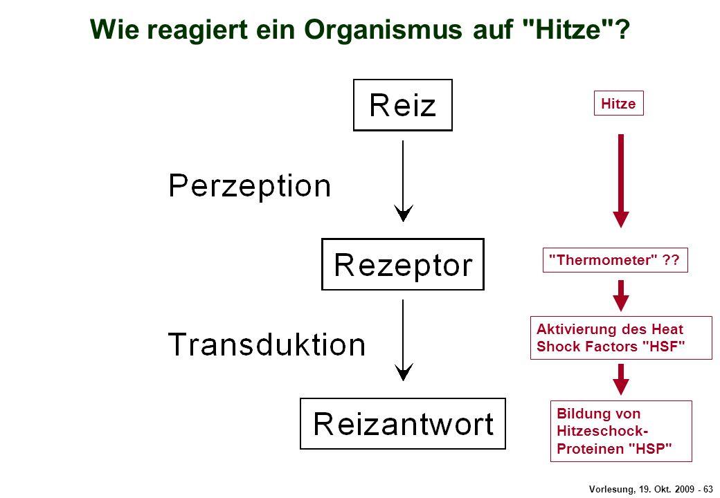 Vorlesung, 19.Okt. 2009 - 63 Wie reagiert ein Organismus auf Hitze .