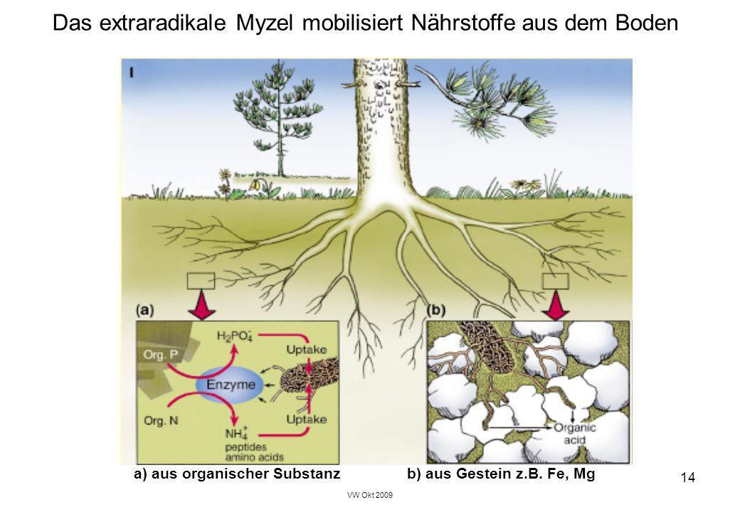 VW Okt 2009 14 Das extraradikale Myzel mobilisiert Nährstoffe aus dem Boden a) aus organischer Substanzb) aus Gestein z.B. Fe, Mg