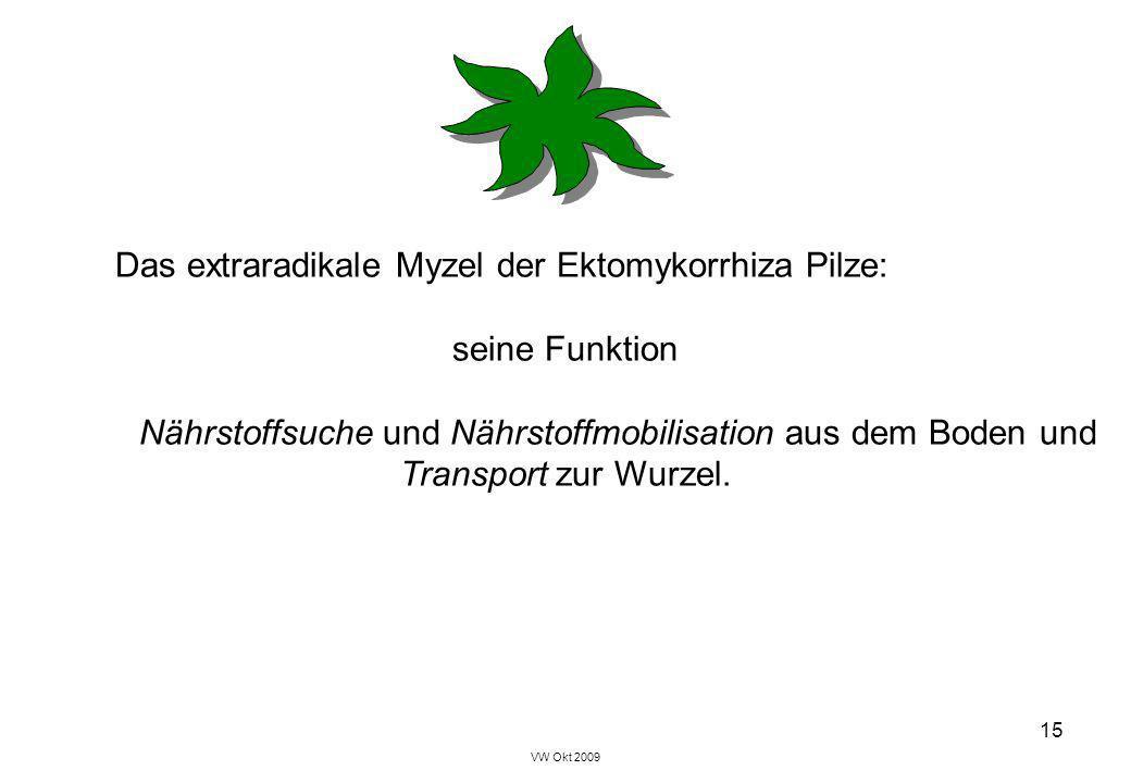 VW Okt 2009 15 Das extraradikale Myzel der Ektomykorrhiza Pilze: seine Funktion Nährstoffsuche und Nährstoffmobilisation aus dem Boden und Transport z