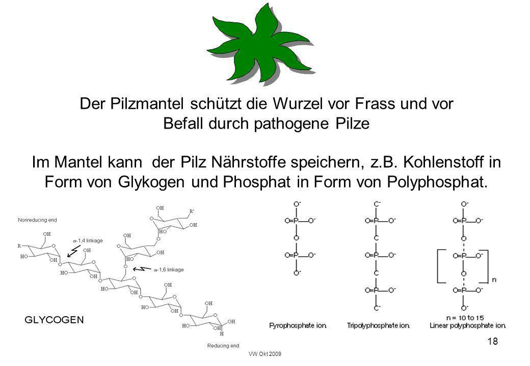VW Okt 2009 18 Der Pilzmantel schützt die Wurzel vor Frass und vor Befall durch pathogene Pilze Im Mantel kann der Pilz Nährstoffe speichern, z.B. Koh