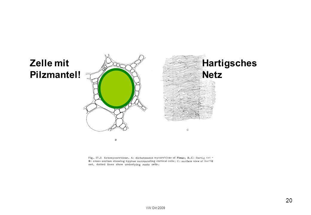 VW Okt 2009 20 Zelle mitHartigsches Pilzmantel!Netz