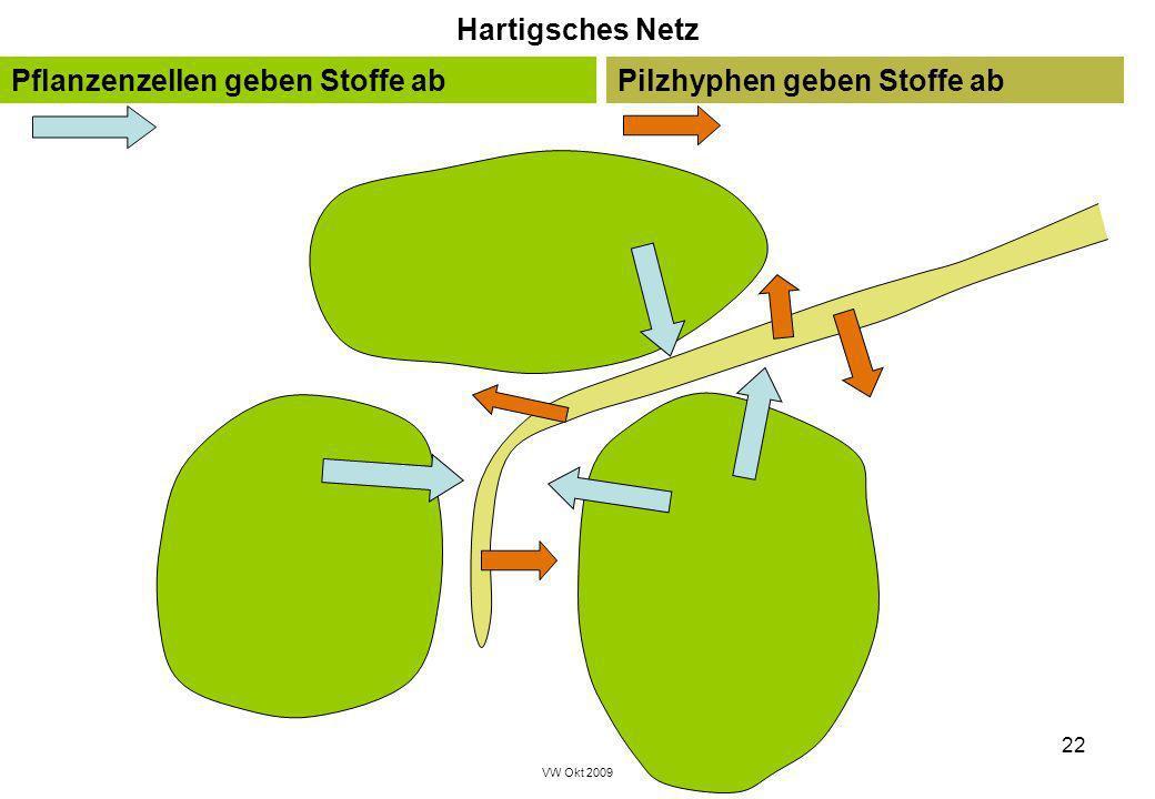 VW Okt 2009 22 Pflanzenzellen geben Stoffe abPilzhyphen geben Stoffe ab Hartigsches Netz