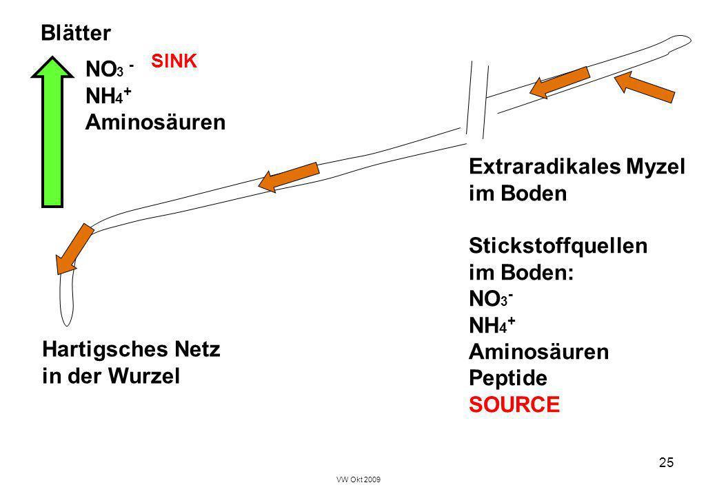 VW Okt 2009 25 Extraradikales Myzel im Boden Stickstoffquellen im Boden: NO 3 - NH 4 + Aminosäuren Peptide SOURCE Hartigsches Netz in der Wurzel Blätt
