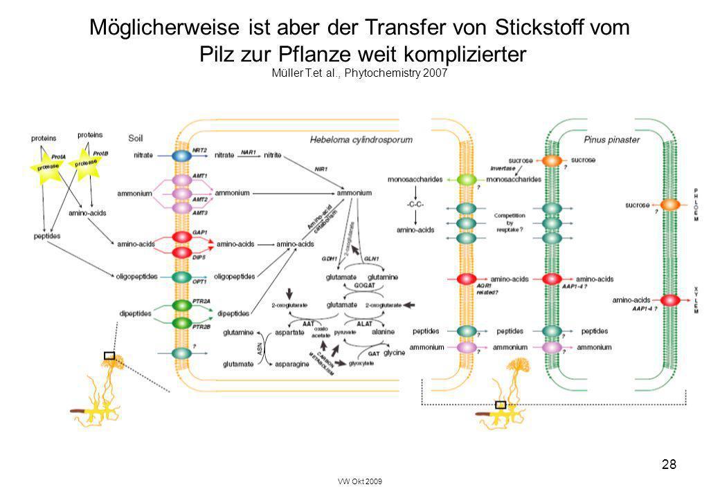 VW Okt 2009 28 Möglicherweise ist aber der Transfer von Stickstoff vom Pilz zur Pflanze weit komplizierter Müller T.et al., Phytochemistry 2007