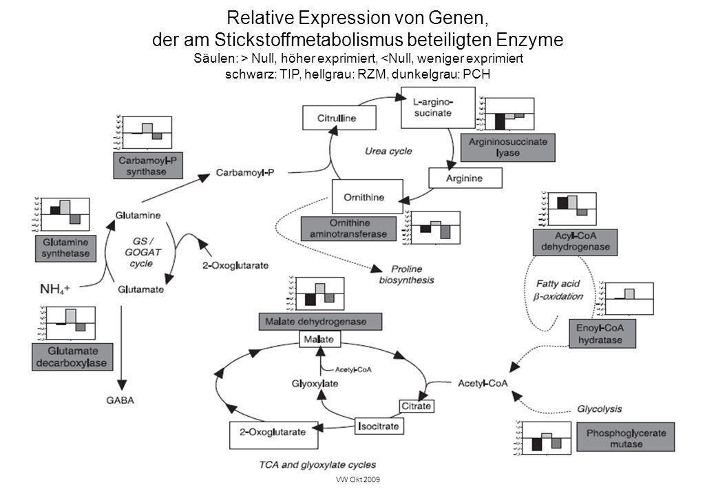 VW Okt 2009 30 Relative Expression von Genen, der am Stickstoffmetabolismus beteiligten Enzyme Säulen: > Null, höher exprimiert, <Null, weniger exprim