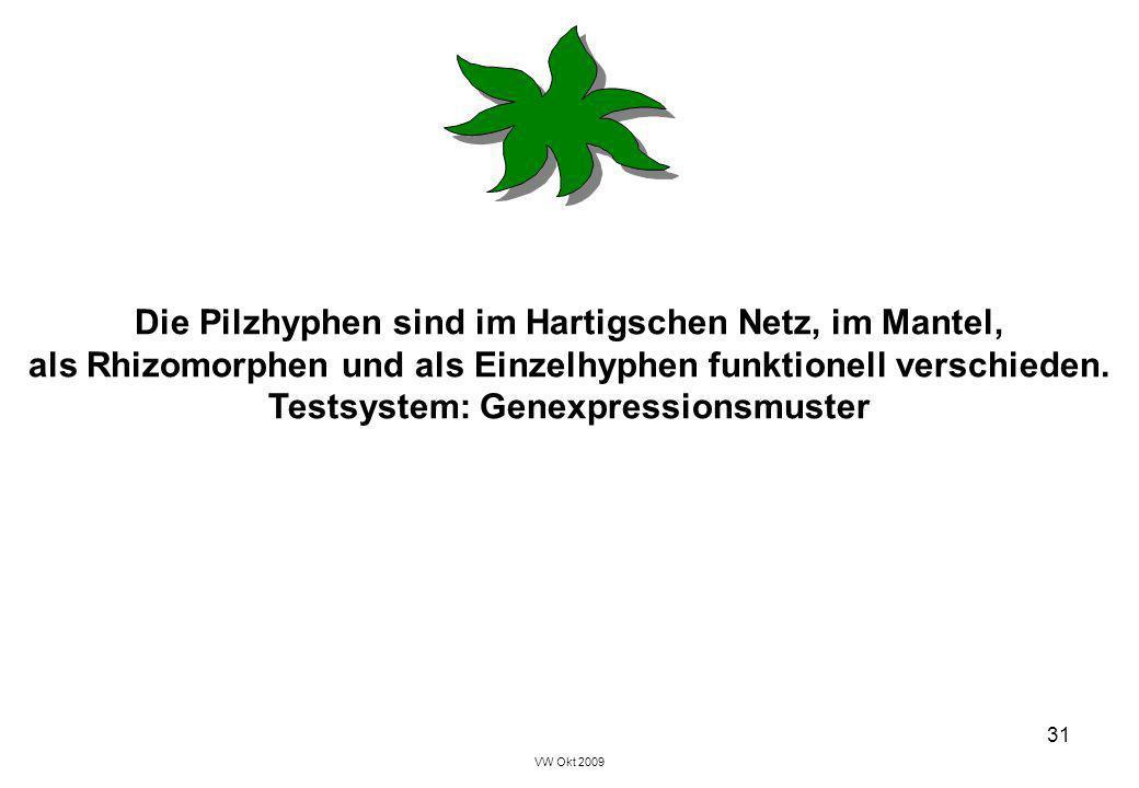 VW Okt 2009 31 Die Pilzhyphen sind im Hartigschen Netz, im Mantel, als Rhizomorphen und als Einzelhyphen funktionell verschieden. Testsystem: Genexpre