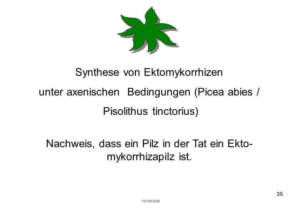 VW Okt 2009 35 Synthese von Ektomykorrhizen unter axenischen Bedingungen (Picea abies / Pisolithus tinctorius) Nachweis, dass ein Pilz in der Tat ein