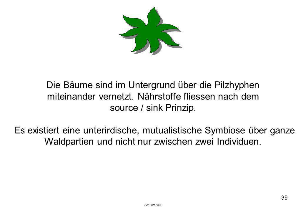 VW Okt 2009 39 Die Bäume sind im Untergrund über die Pilzhyphen miteinander vernetzt. Nährstoffe fliessen nach dem source / sink Prinzip. Es existiert