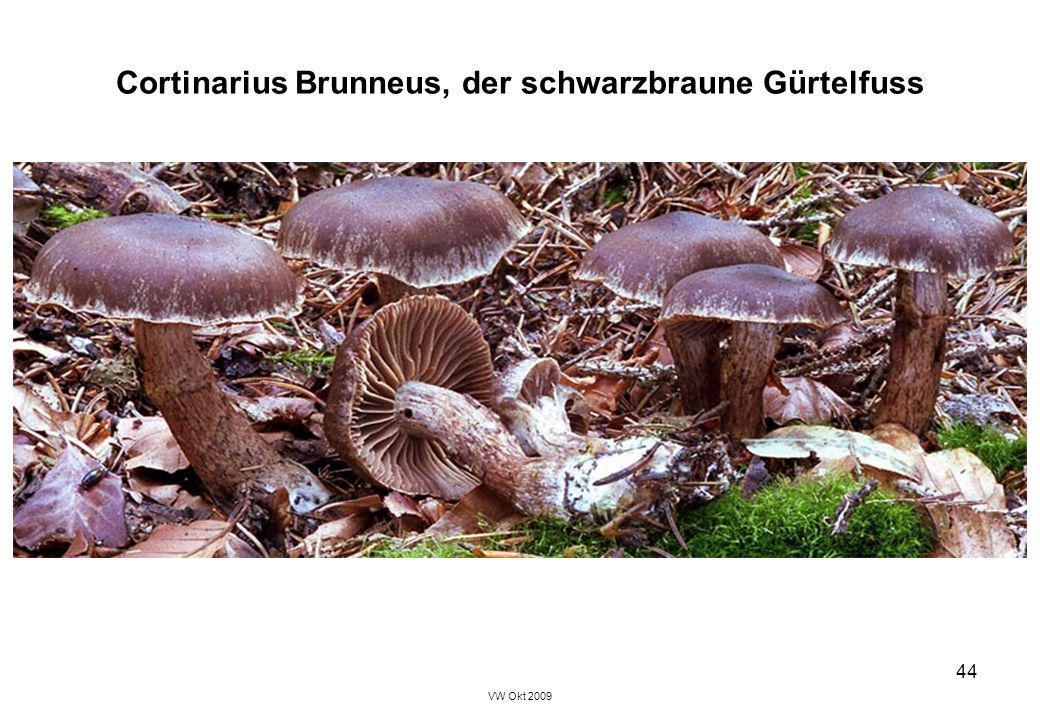 VW Okt 2009 44 Cortinarius Brunneus, der schwarzbraune Gürtelfuss