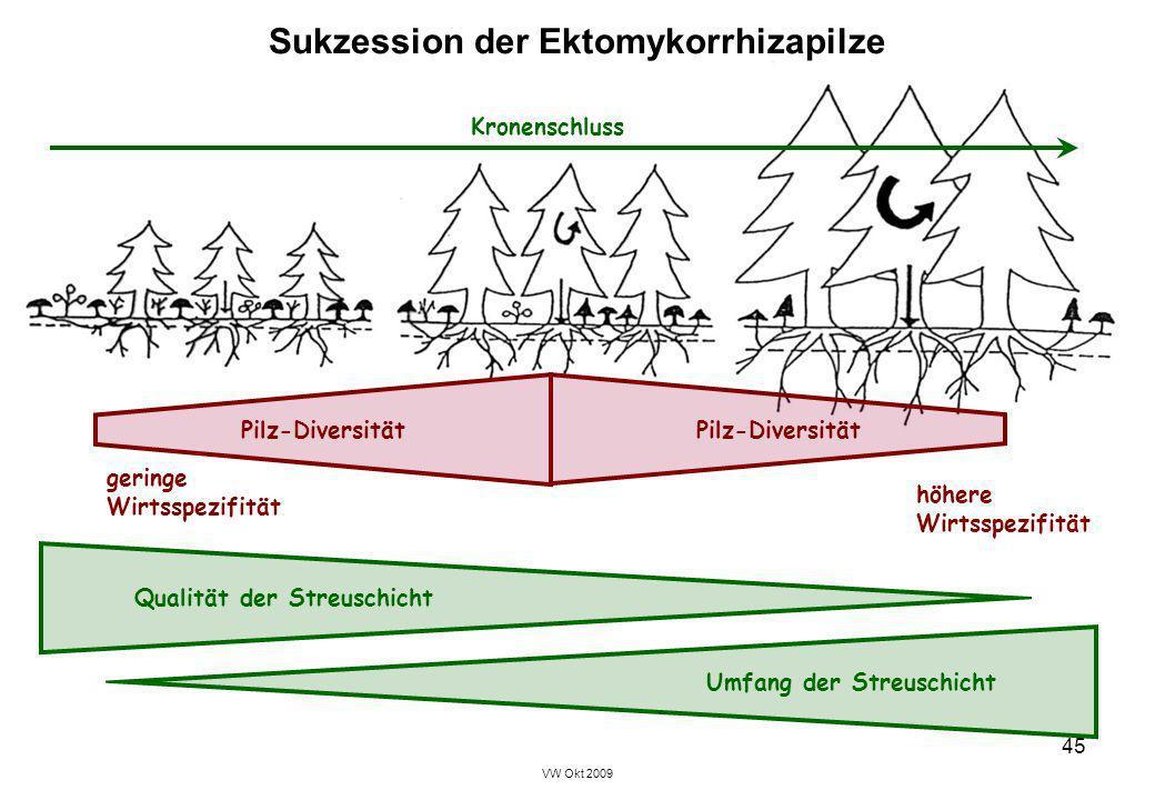 VW Okt 2009 45 Sukzession der Ektomykorrhizapilze Kronenschluss geringe Wirtsspezifität höhere Wirtsspezifität Qualität der Streuschicht Umfang der St