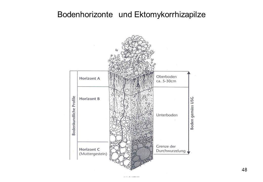 VW Okt 2009 48 Bodenhorizonte und Ektomykorrhizapilze