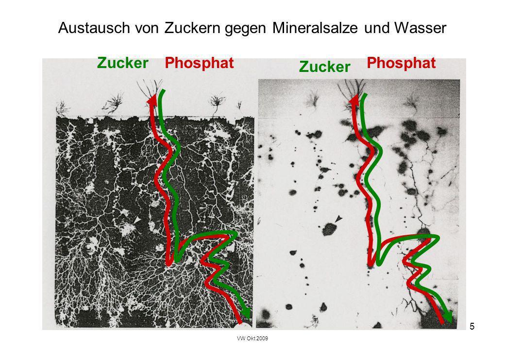 VW Okt 2009 5 Austausch von Zuckern gegen Mineralsalze und Wasser Phosphat Zucker