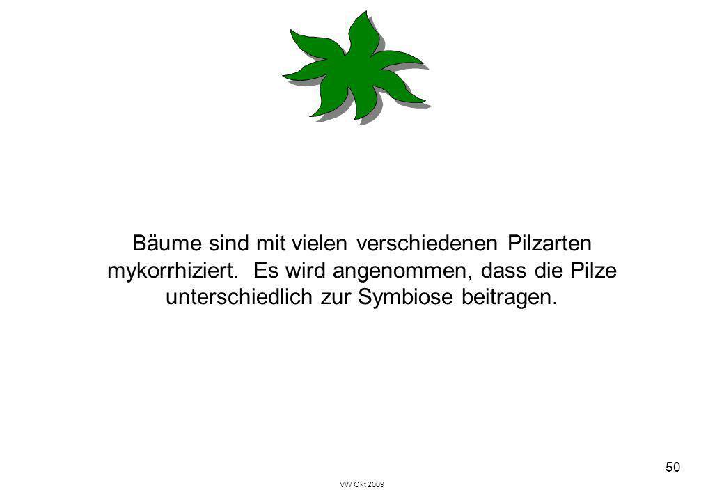 VW Okt 2009 50 Bäume sind mit vielen verschiedenen Pilzarten mykorrhiziert. Es wird angenommen, dass die Pilze unterschiedlich zur Symbiose beitragen.
