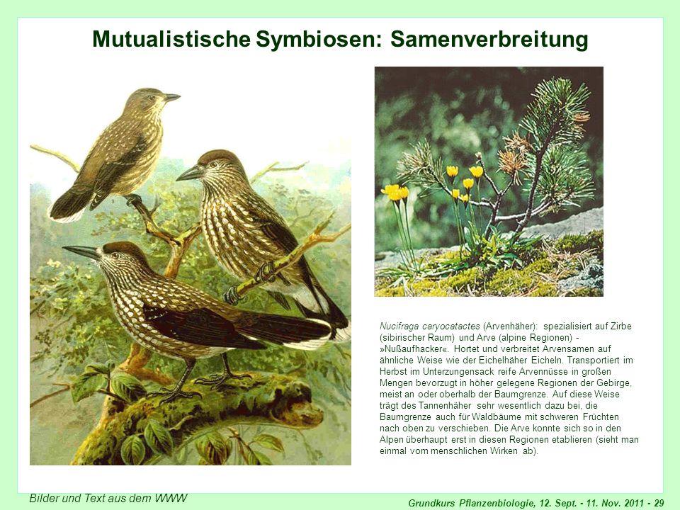 Grundkurs Pflanzenbiologie, 12. Sept. - 11. Nov. 2011 - 29 Mutualistische Symbiosen: Samenverbreitung Bilder und Text aus dem WWW Nucifraga caryocatac