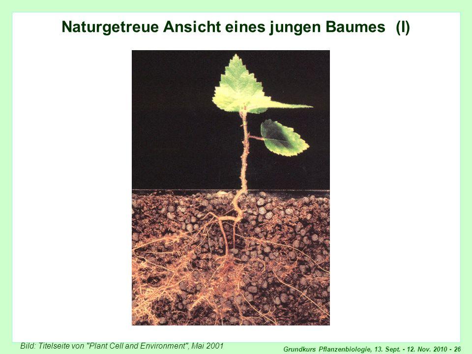 Grundkurs Pflanzenbiologie, 13. Sept. - 12. Nov. 2010 - 26 Naturgetreue Ansicht eines jungen Baumes (I) Bild: Titelseite von