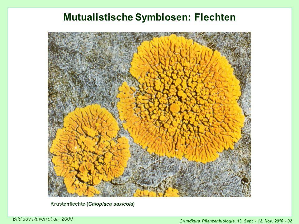 Grundkurs Pflanzenbiologie, 13. Sept. - 12. Nov. 2010 - 32 Mutualistische Symbiosen: Flechten Krustenflechte (Caloplaca saxicola) Bild aus Raven et al