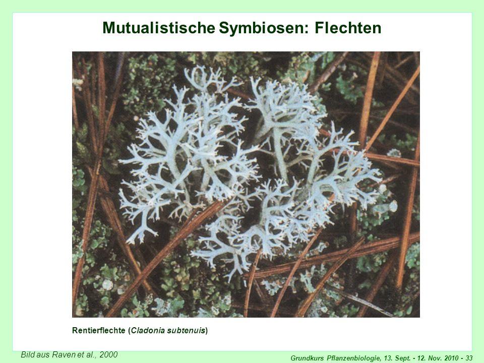 Grundkurs Pflanzenbiologie, 13. Sept. - 12. Nov. 2010 - 33 Mutualistische Symbiosen: Flechten Rentierflechte (Cladonia subtenuis) Bild aus Raven et al