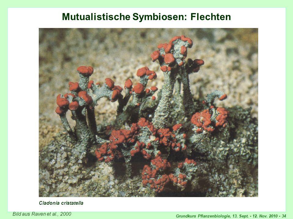 Grundkurs Pflanzenbiologie, 13. Sept. - 12. Nov. 2010 - 34 Mutualistische Symbiosen: Flechten Cladonia cristatella Bild aus Raven et al., 2000 Cladoni