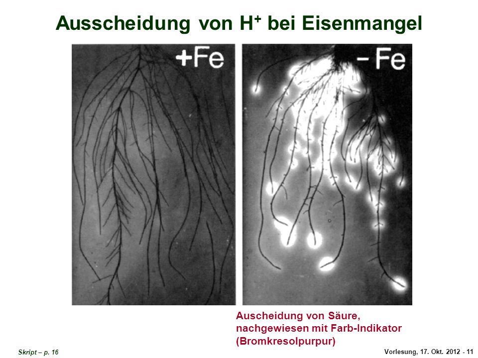 Vorlesung, 17. Okt. 2012 - 11 Ausscheidung von H + bei Eisenmangel Auscheidung von Säure, nachgewiesen mit Farb-Indikator (Bromkresolpurpur) Ausscheid