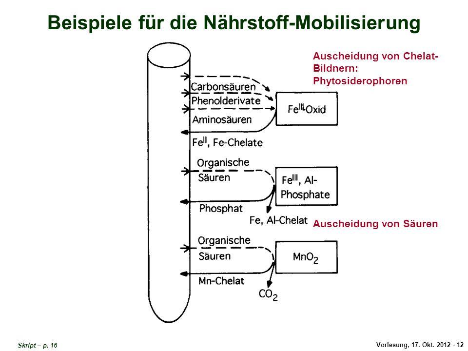 Vorlesung, 17. Okt. 2012 - 12 Beispiele für die Nährstoff-Mobilisierung Auscheidung von Säuren Auscheidung von Chelat- Bildnern: Phytosiderophoren Bei