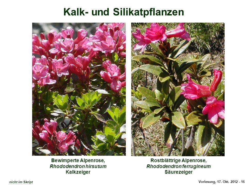 Vorlesung, 17. Okt. 2012 - 16 Kalk- und Silikatpflanzen Bewimperte Alpenrose, Rhododendron hirsutum Kalkzeiger Rostblättrige Alpenrose, Rhododendron f