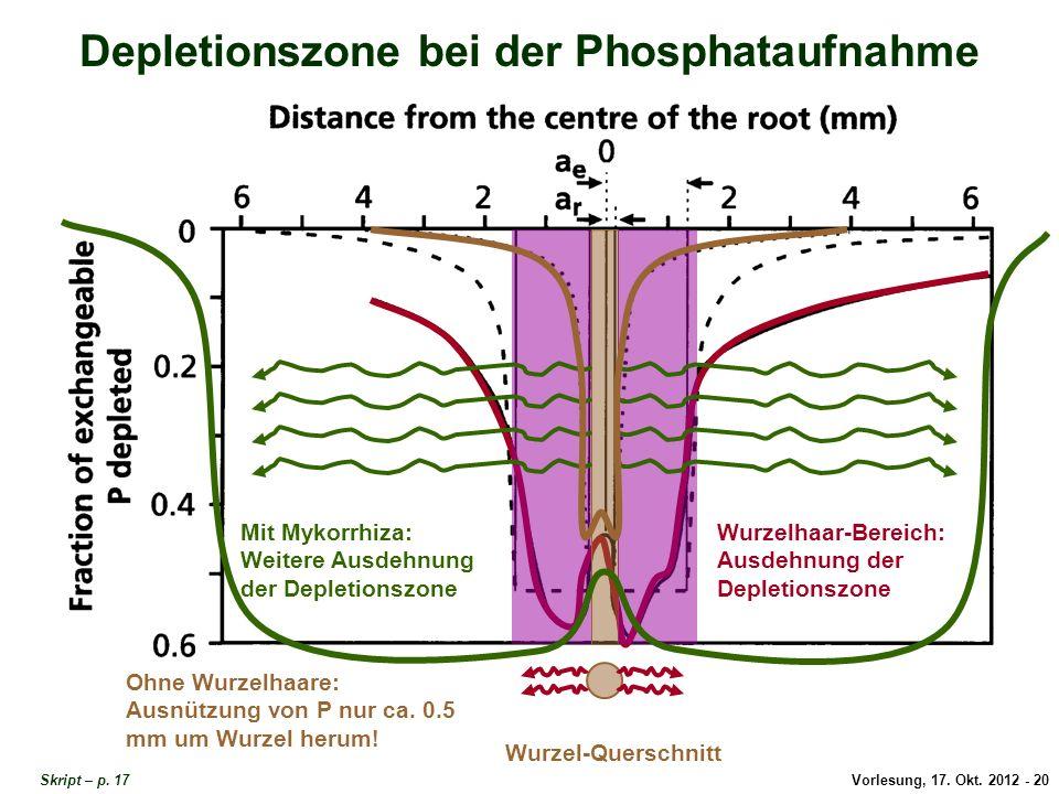 Vorlesung, 17. Okt. 2012 - 20 Depletionszone bei der Phosphataufnahme Wurzel-Querschnitt Wurzelhaar-Bereich: Ausdehnung der Depletionszone Mit Mykorrh