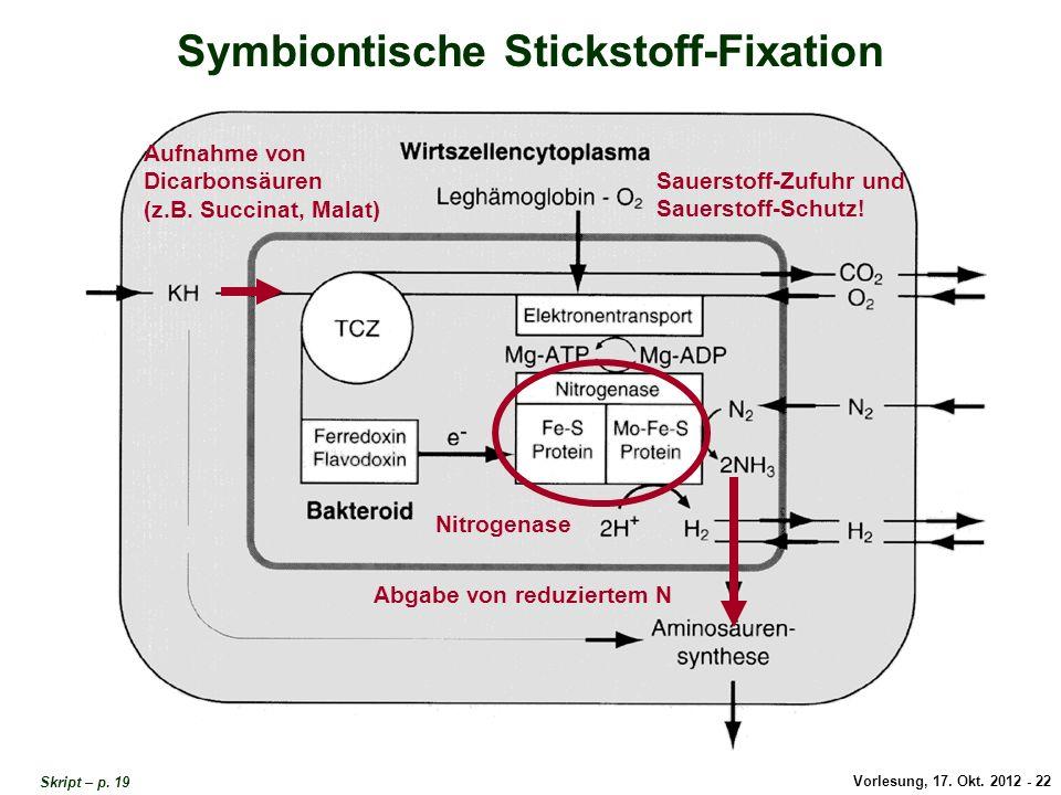 Vorlesung, 17. Okt. 2012 - 22 Symbiontische Stickstoff-Fixation Aufnahme von Dicarbonsäuren (z.B. Succinat, Malat) Sauerstoff-Zufuhr und Sauerstoff-Sc