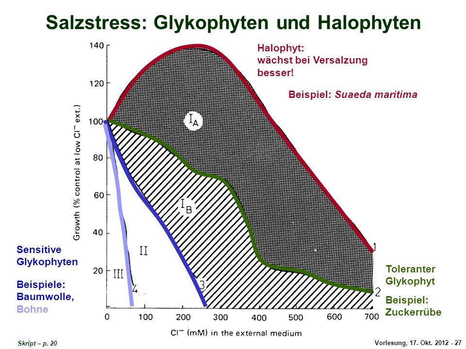 Vorlesung, 17. Okt. 2012 - 27 Salzstress: Glykophyten und Halophyten Beispiel: Suaeda maritima Halophyt: wächst bei Versalzung besser! Toleranter Glyk
