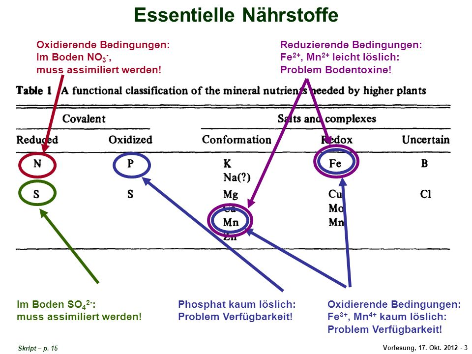 Vorlesung, 17. Okt. 2012 - 3 Essentielle Nährstoffe Oxidierende Bedingungen: Im Boden NO 3 -, muss assimiliert werden! Im Boden SO 4 2- : muss assimil