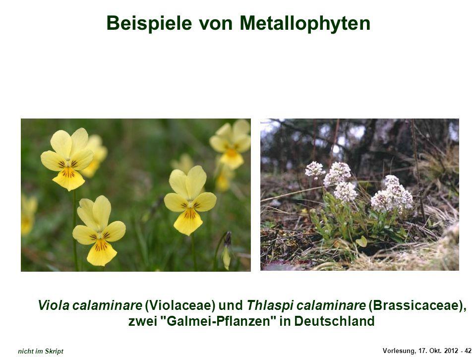 Vorlesung, 17. Okt. 2012 - 42 Beispiele von Metallophyten Viola calaminare (Violaceae) und Thlaspi calaminare (Brassicaceae), zwei