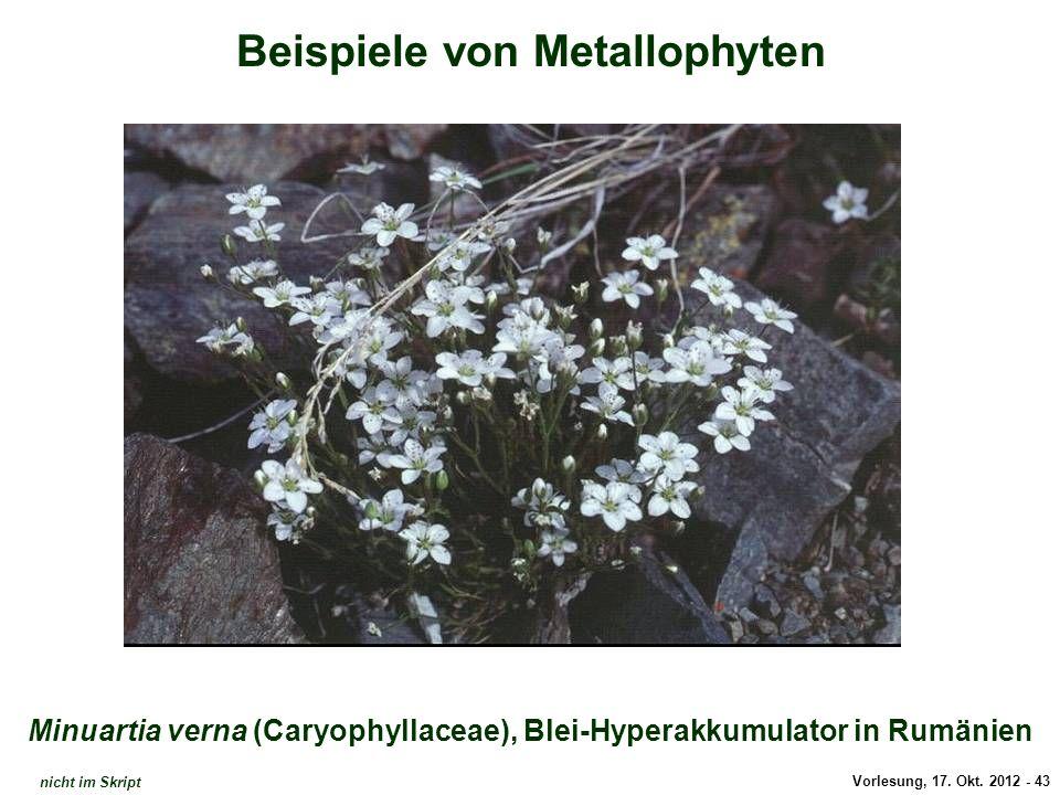Vorlesung, 17. Okt. 2012 - 43 Beispiele von Metallophyten Minuartia verna (Caryophyllaceae), Blei-Hyperakkumulator in Rumänien Minuartia verna (Blei-H
