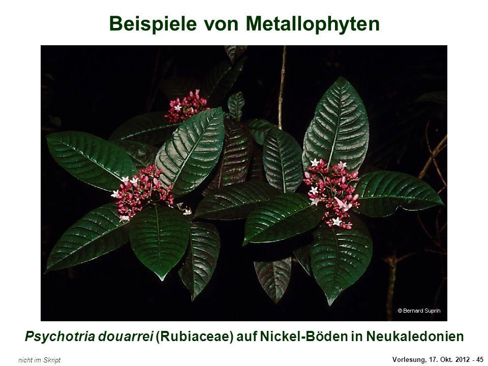 Vorlesung, 17. Okt. 2012 - 45 Beispiele von Metallophyten Psychotria douarrei (Rubiaceae) auf Nickel-Böden in Neukaledonien Jasione montana / Arsen ni