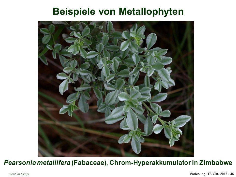Vorlesung, 17. Okt. 2012 - 46 Beispiele von Metallophyten Pearsonia metallifera (Fabaceae), Chrom-Hyperakkumulator in Zimbabwe Pearsonia metallifera (