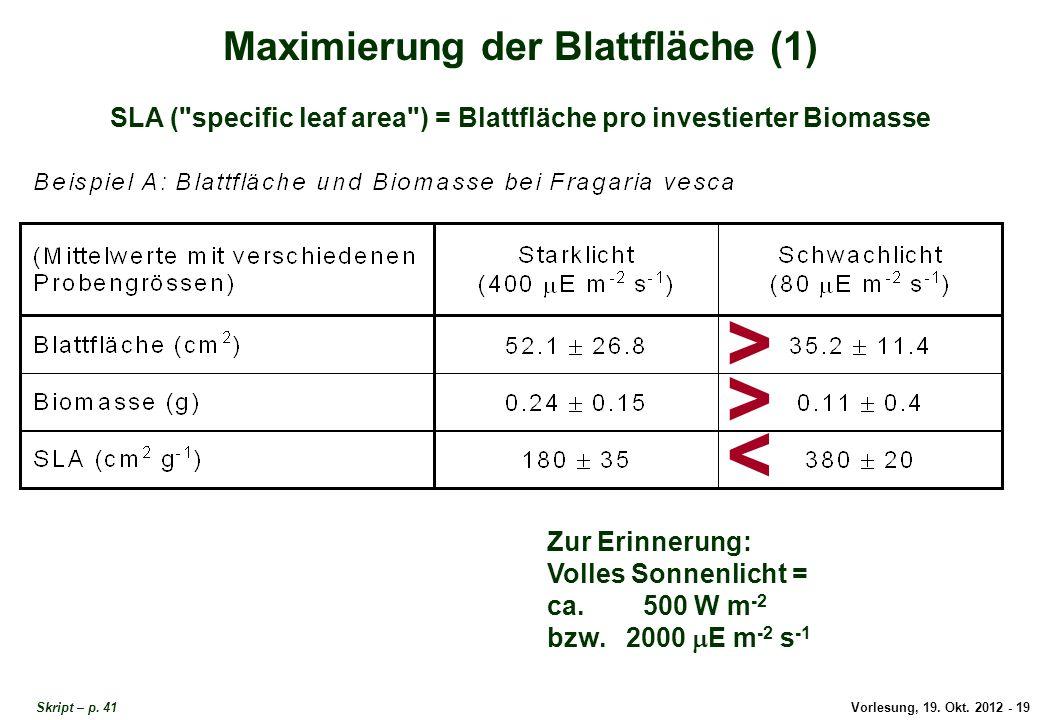Vorlesung, 19. Okt. 2012 - 19 Skript – p. 41 Maximierung der Blattfläche (1) SLA (
