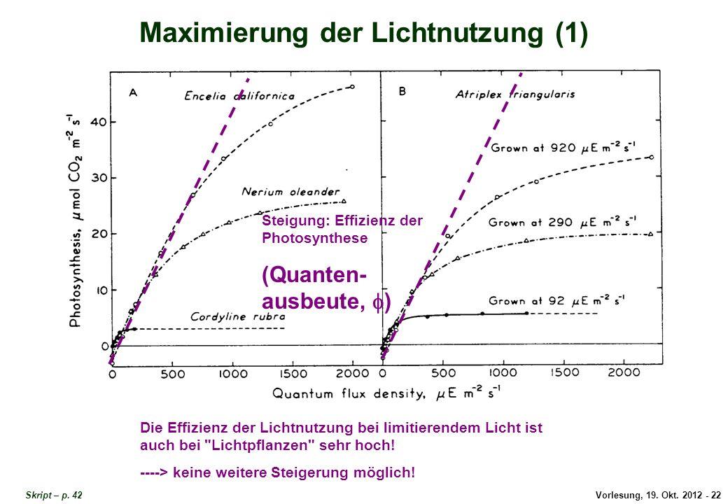 Vorlesung, 19. Okt. 2012 - 22 Skript – p. 42 Maximierung der Lichtnutzung (1) Steigung: Effizienz der Photosynthese (Quanten- ausbeute, ) Die Effizien