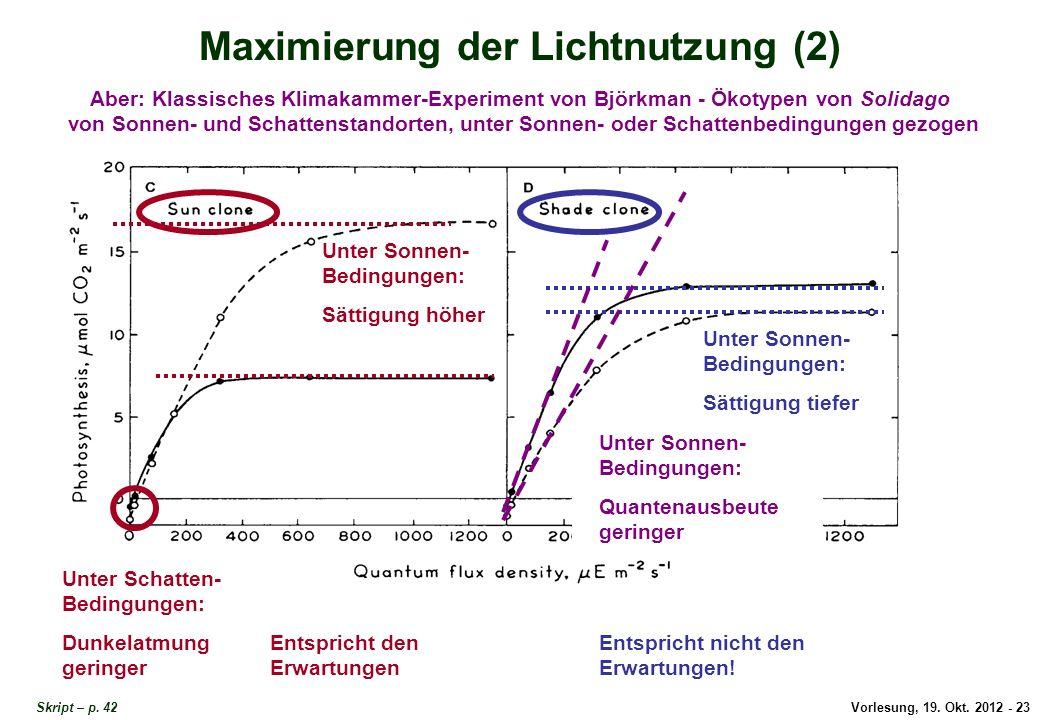 Vorlesung, 19. Okt. 2012 - 23 Skript – p. 42 Maximierung der Lichtnutzung (2) Aber: Klassisches Klimakammer-Experiment von Björkman - Ökotypen von Sol