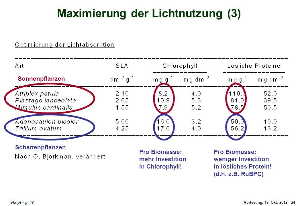 Vorlesung, 19. Okt. 2012 - 24 Skript – p. 42 Maximierung der Lichtnutzung (3) Schattenpflanzen Sonnenpflanzen Pro Biomasse: mehr Investition in Chloro