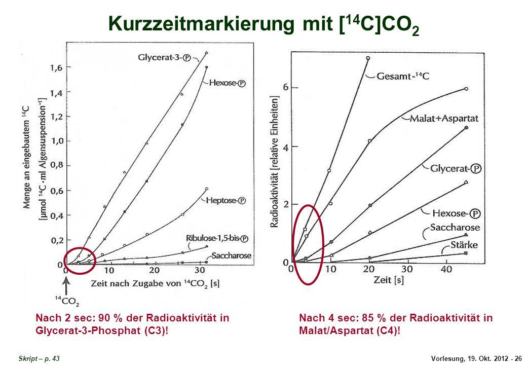 Vorlesung, 19. Okt. 2012 - 26 Skript – p. 43 Kurzzeitmarkierung mit [ 14 C]CO 2 Nach 2 sec: 90 % der Radioaktivität in Glycerat-3-Phosphat (C3)! Nach