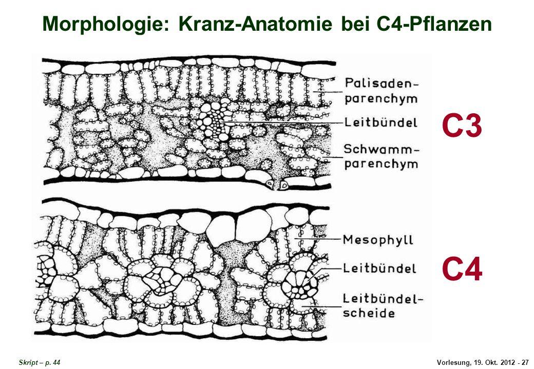 Vorlesung, 19. Okt. 2012 - 27 Skript – p. 44 Morphologie: Kranz-Anatomie bei C4-Pflanzen C3 C4 Kranz-Anatomie