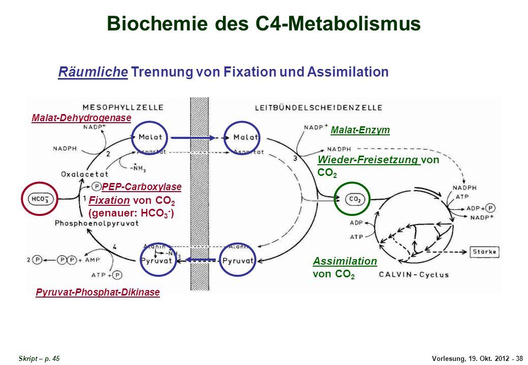 Vorlesung, 19. Okt. 2012 - 38 Skript – p. 45 Biochemie des C4-Metabolismus Fixation von CO 2 (genauer: HCO 3 - ) Räumliche Trennung von Fixation und A