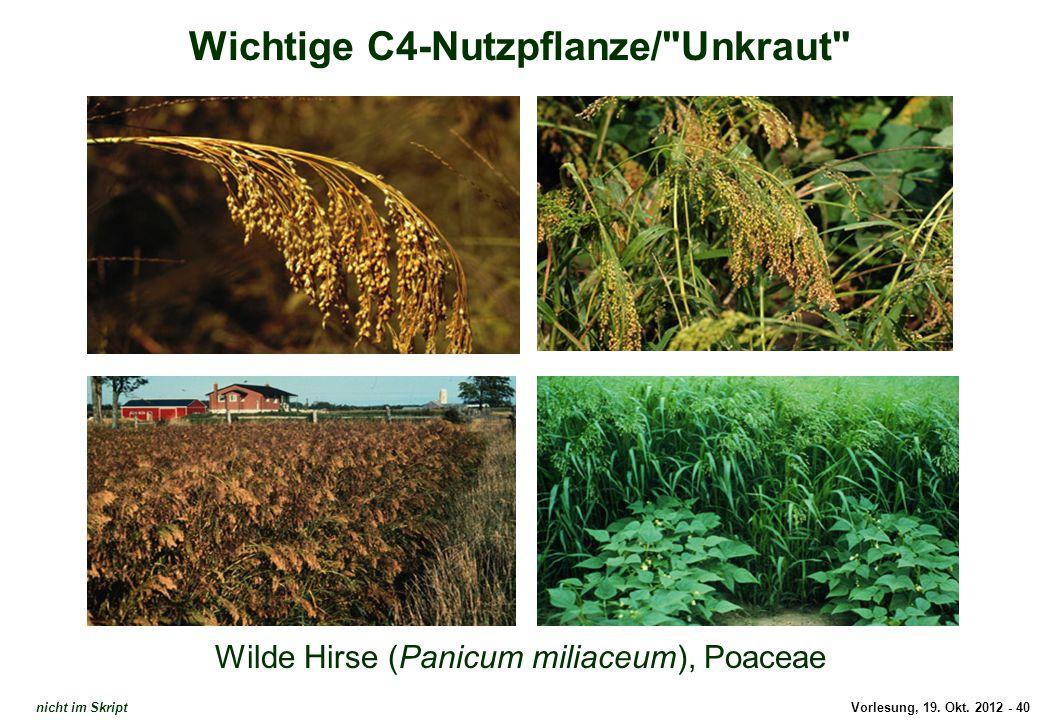 Vorlesung, 19. Okt. 2012 - 40 Wichtige C4-Nutzpflanze/