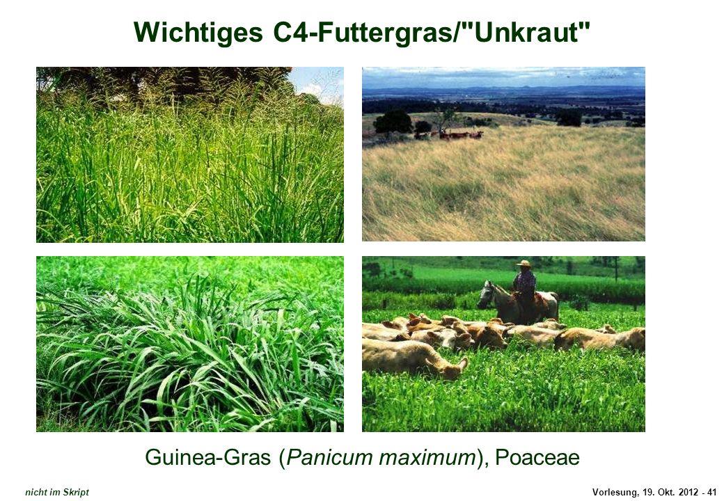Vorlesung, 19. Okt. 2012 - 41 Wichtiges C4-Futtergras/