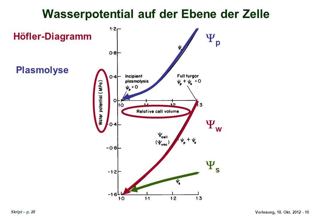 Vorlesung, 18. Okt. 2012 - 10 Wasserpotential auf der Ebene der Zelle Höfler-Diagramm w p s Plasmolyse Wasserverhältnisse in der Zelle Skript – p. 28