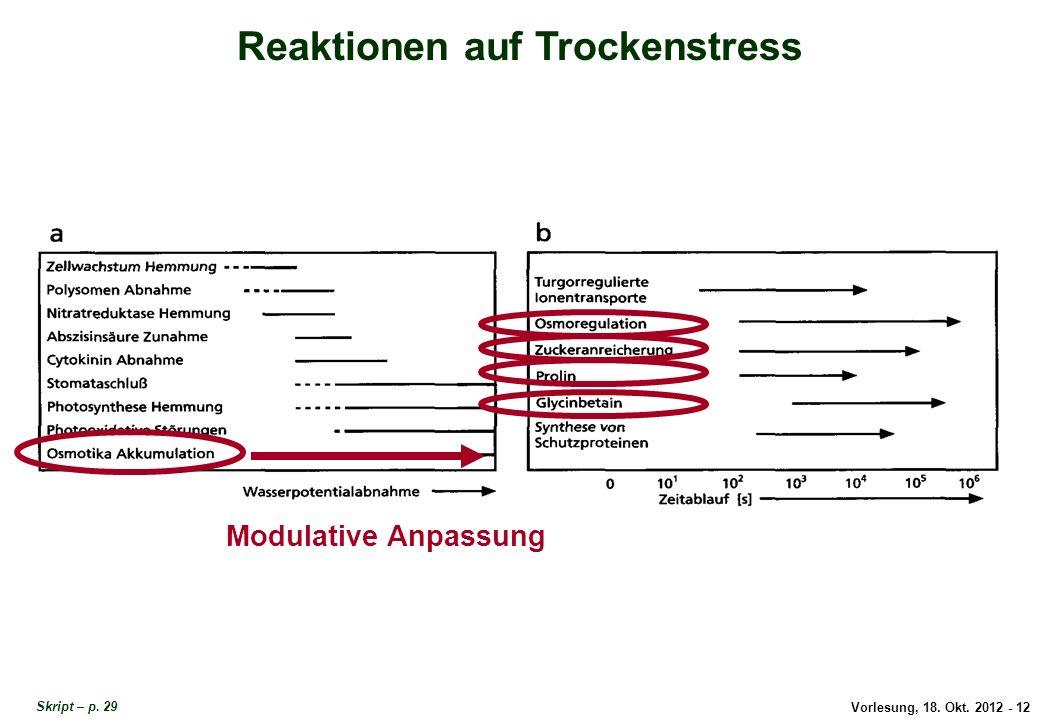 Vorlesung, 18. Okt. 2012 - 12 Reaktionen auf Trockenstress Modulative Anpassung Reaktionen auf Trockenstress Skript – p. 29