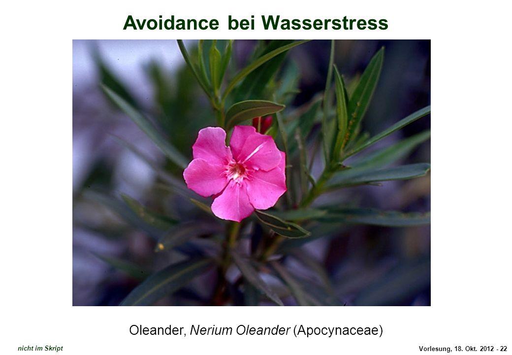 Vorlesung, 18. Okt. 2012 - 22 Avoidance bei Wasserstress Oleander, Nerium Oleander (Apocynaceae) Avoidance: Nerium Oleander nicht im Skript